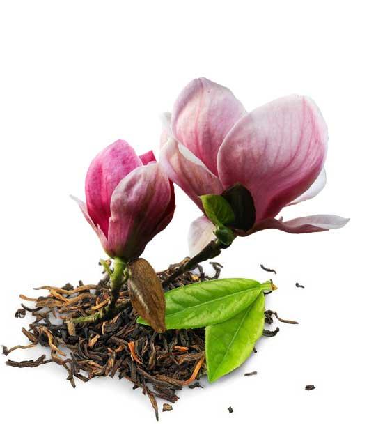 Stowarzyszenie Magnolia